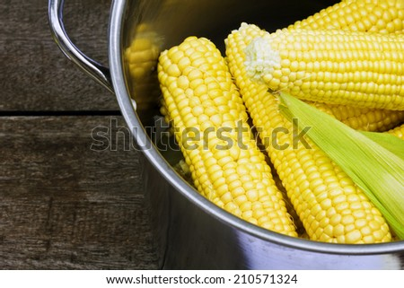 Boiled corn in a saucepan