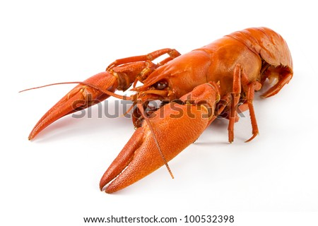 Boiled craw fish on a white background - stock photo