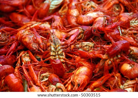 Boiled crawfish prepared for a Louisiana party. - stock photo