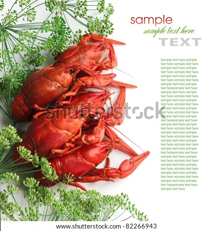 Boiled crayfish with dill isolated on a white background - stock photo