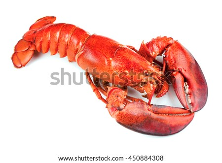 Boiled lobster isolated on white background - stock photo