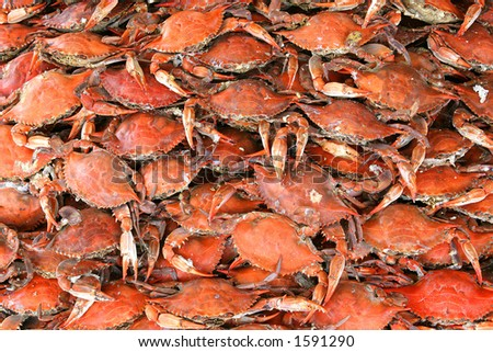 Boiled or steamed crab crabs - stock photo
