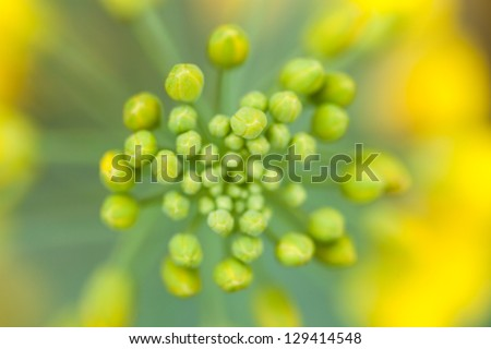 bok choi blooming in spring - stock photo