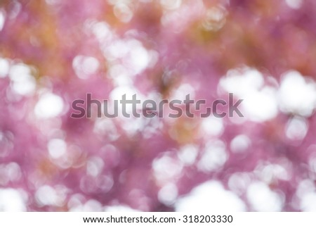 bokeh blurry natural abstract pink background  - stock photo