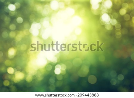 bokeh in sunny forest - stock photo