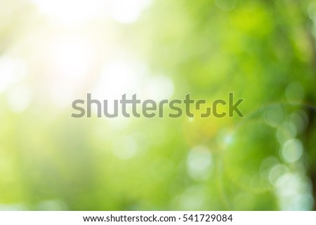 Bokeh leaf background. High resolution empty space concept for Banner, website, decoration card, retro bio eco.