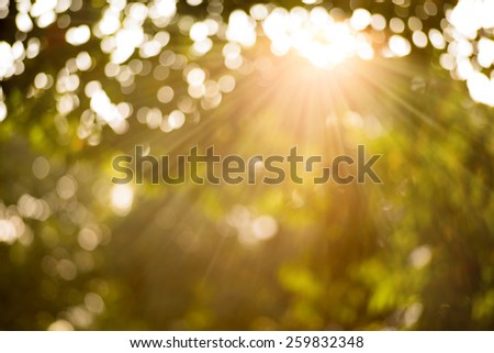 Bokeh leaf with sunlight, warm tone color use for background