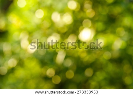 Bokeh Nature background.  abstract green background from tree. Defocused lights from tree and leaves.  - stock photo