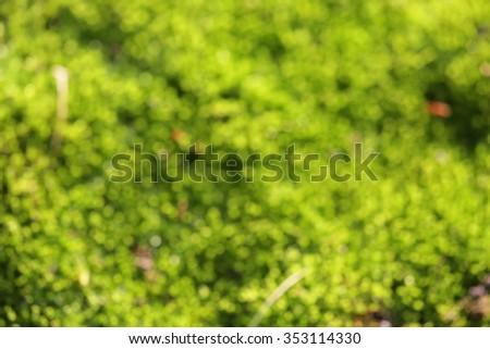 Bokeh of green moss - stock photo