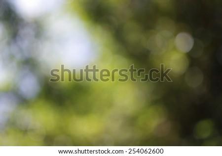 bokeh of light under the dense canopy - stock photo