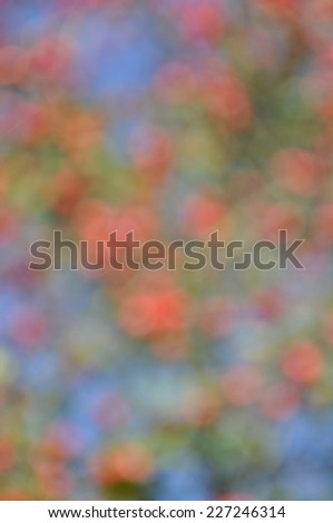 Bokeh of rose hip in autumn - stock photo