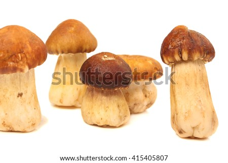 Boletus edulis (king bolete) isolated on white background. Close up.