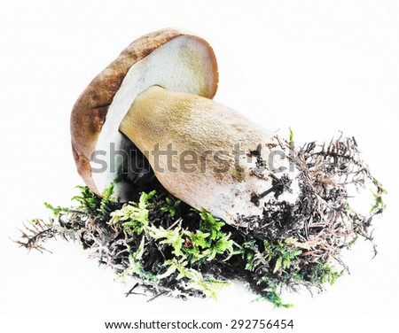 Boletus Mushroom and Moss Isolated on White - stock photo
