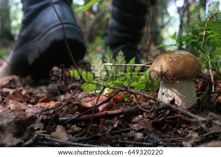 boletus mushrooming man