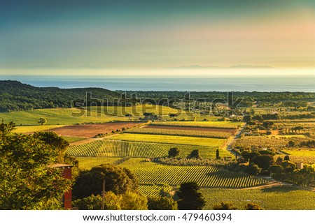 Bolgheri and Castagneto vineyard aerial view on sunset. Maremma Tuscany, Italy, Europe.