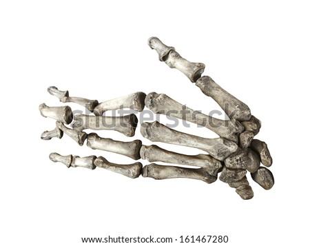 bone human hand isolated on white background - stock photo