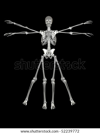 Bones & Skeleton Vitruvian man - stock photo