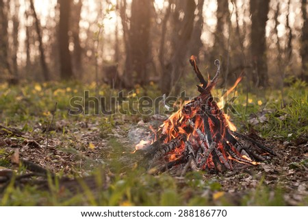 Bonfire in the forest at sunset. Shallow depth of field. - stock photo