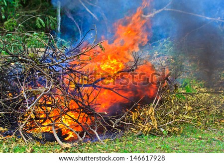 Bonfire in the forest Burning wood - stock photo
