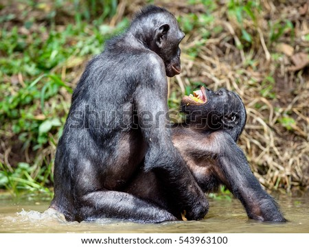 Chimpanzee Stock Images, Royalty-Free Images & Vectors ...