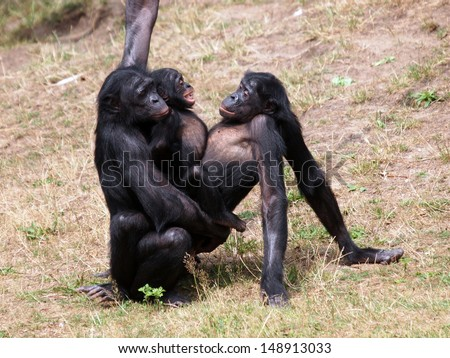 Situation Girles having sex with monkeys can