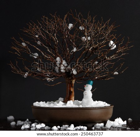 Bonsai elm tree with little snowman on a dark background.