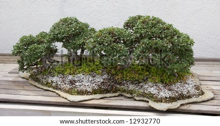 Bonsai Forest - stock photo