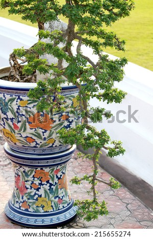 Bonsai garden plants - stock photo