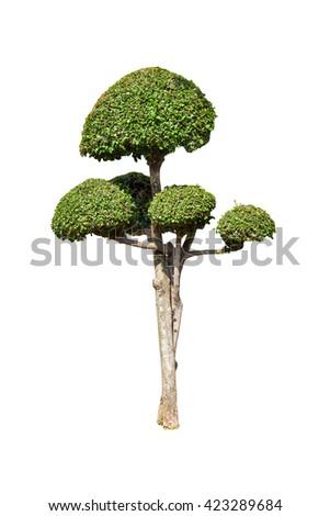bonsai green trees isolated on white background - stock photo