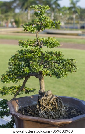 bonsai in the garden