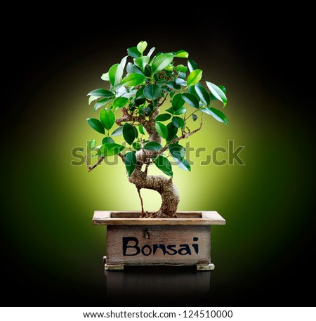 Bonsai isolated on Black background - stock photo