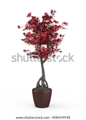Bonsai japanese maple with red leaves in pot isolated on white background. 3D Rendering, 3D Illustration. - stock photo