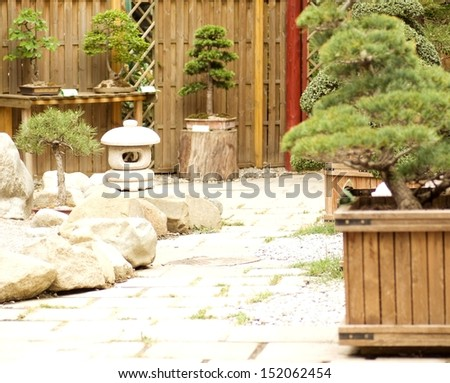 Bonsai maple trees in the garden - stock photo