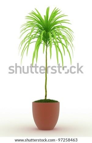 bonsai palm Isolated over white