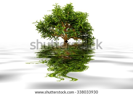 Bonsai  Pemphis  Acidula isolated on white  and water refection. - stock photo