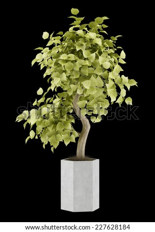 bonsai plant in pot isolated on black background - stock photo