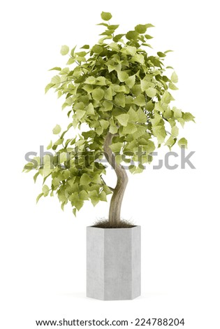 bonsai plant in pot isolated on white background - stock photo