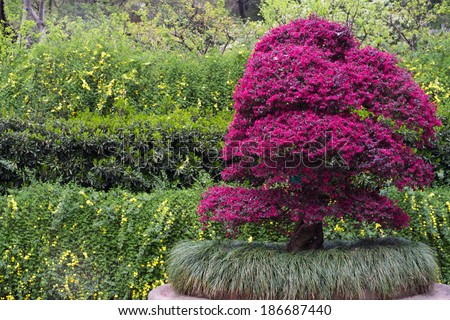 Bonsai Stand Out among Green Leaf Tree