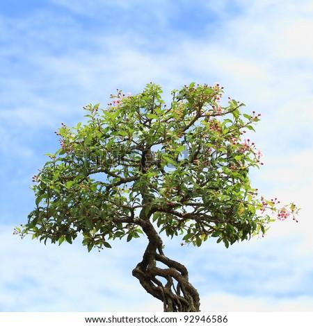 Bonsai tree at Thailand - stock photo
