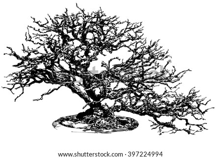 Bonsai tree. Black and white dashed style sketch, line art, drawing with pen and ink. Retro vintage picture. - stock photo