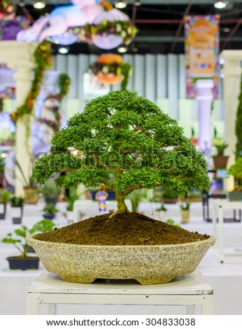 Bonsai tree Bonsai Exhibition - stock photo