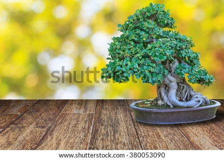 Bonsai tree in a ceramic pot on wooden floor with blurred bokeh background. - stock photo
