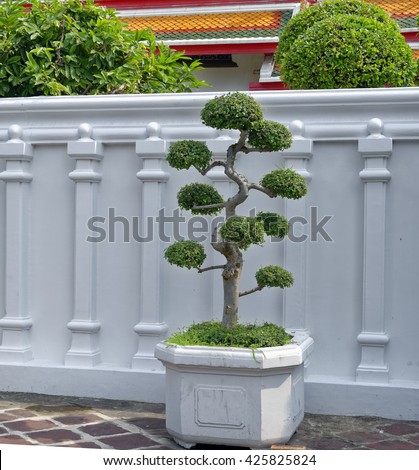 Bonsai tree in a planter