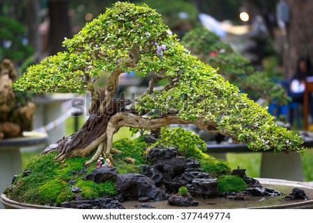 bonsai tree in garden - stock photo