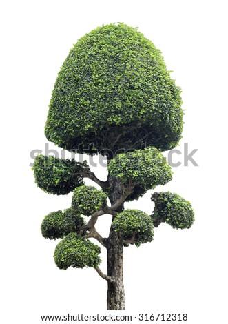 Bonsai tree isolated on white - stock photo