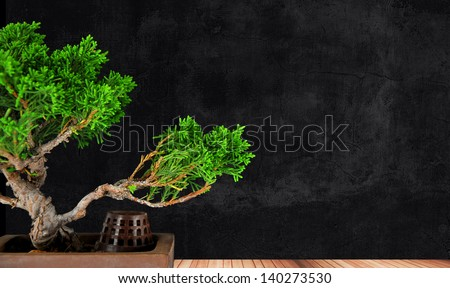bonsai tree juniper class on a wooden platform - stock photo