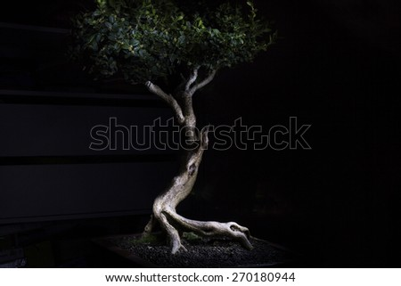 Bonsai Tree. Light decoration. Zen Art - stock photo