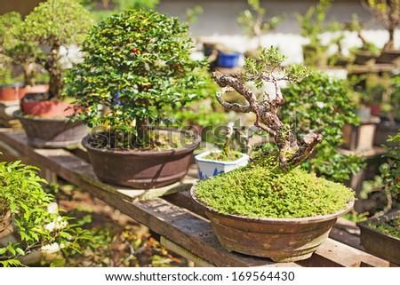 bonsai tree nursery - stock photo