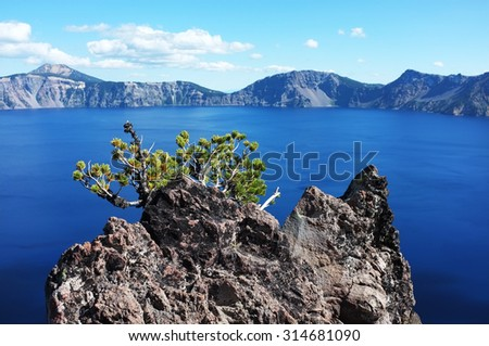 Bonsai tree on the rock in Crater Lake, OR, USA. Amazing scenery old rock with plant. - stock photo