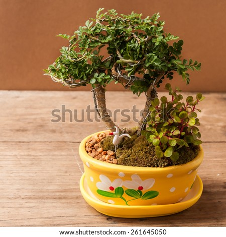 bonsai tree on wooden table - stock photo